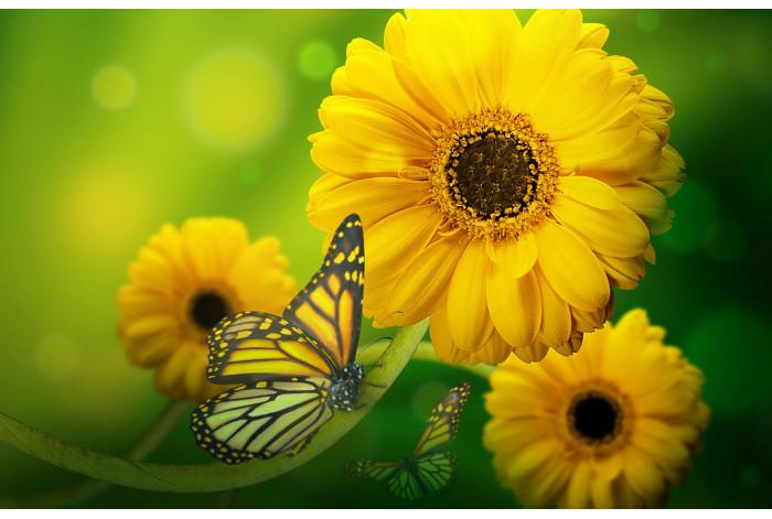 Модульная картина Бабочка с желтым цветком